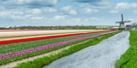 טיול להולנד למשפחות